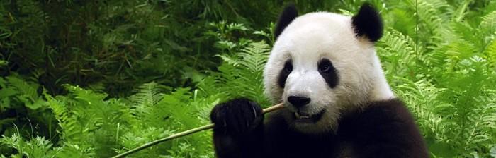 Google Panda e come Posizionarsi sui motori