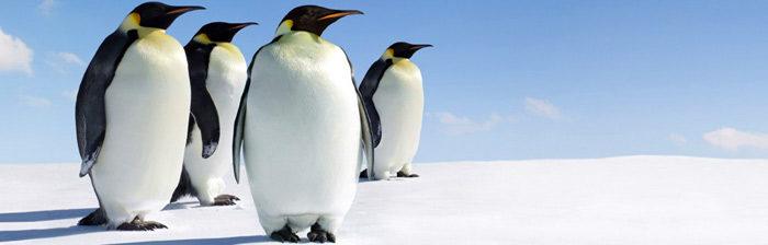 Google Penguin e Posizionamento nei motori di ricerca