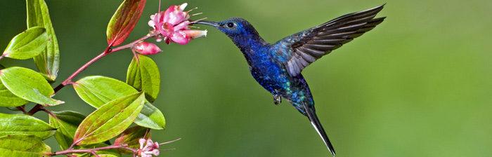 Google Hummingbird e il Posizionamento siti